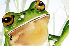 frog236x157