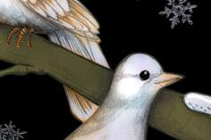 turtle-doves236x157