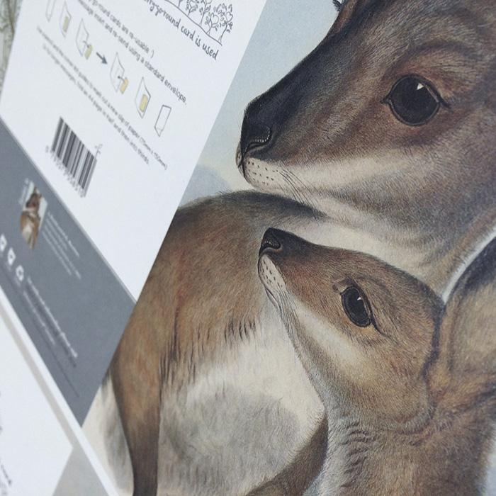 Kangaroo by Gould